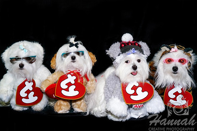 A Family of Maltese Wearing Their Halloween Costumes