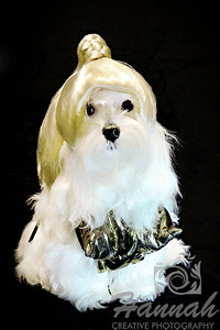 Close-up of a female Maltese named Peaches wearing a pop princess costume   © Copyright Hannah Pastrana Prieto