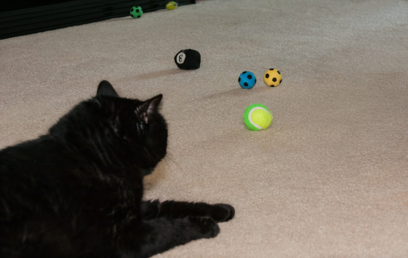 Nox checking out his toys.