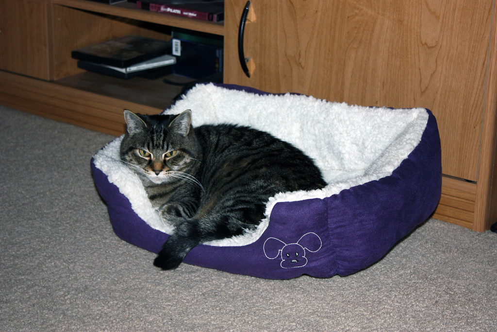 Olive in her bed.