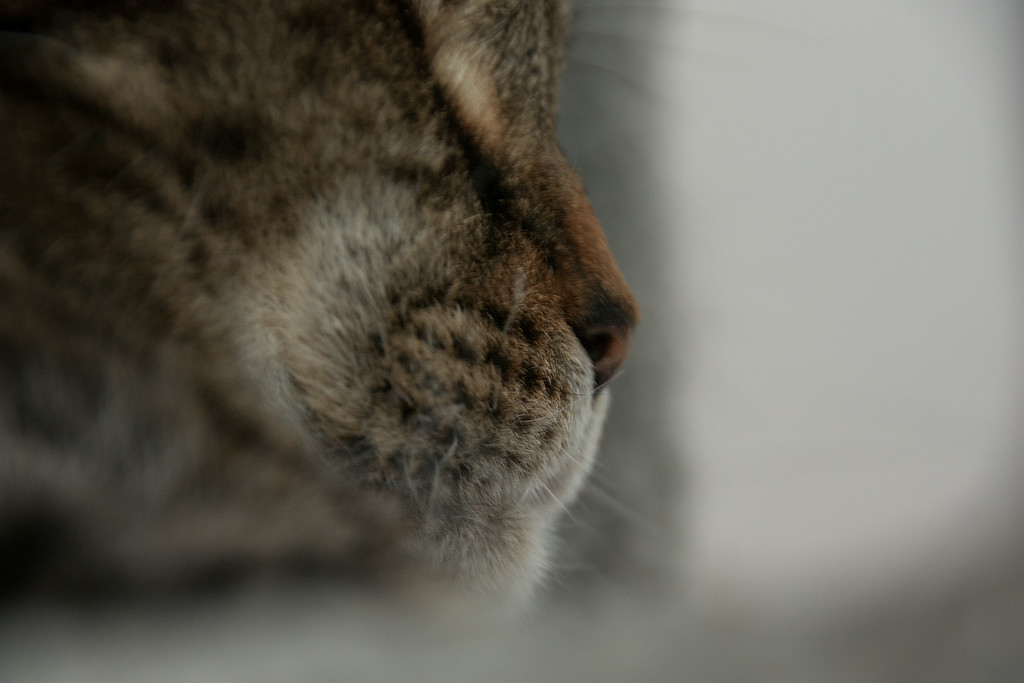 Olive Nose2b