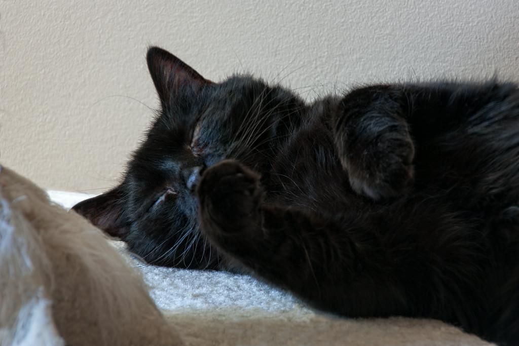 Nox still sleeping.