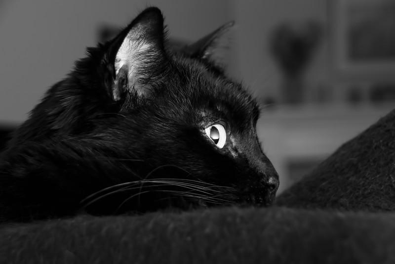 Nox's Profile.