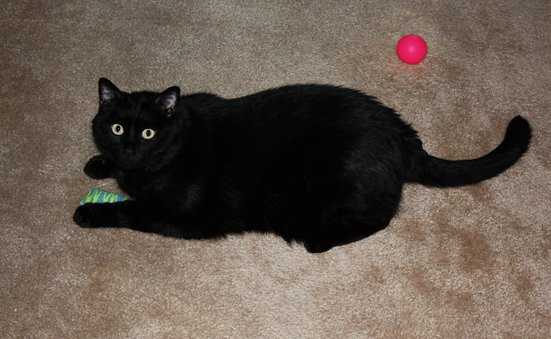 Nox playing with his toys.