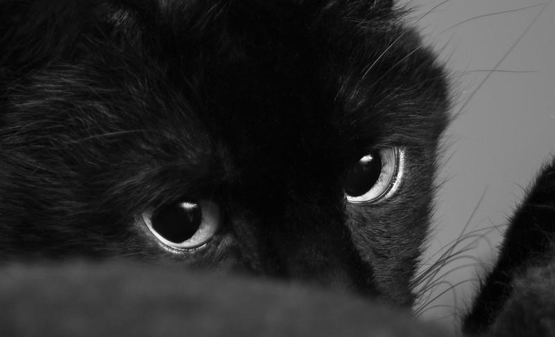 Through Nox's Eyes.