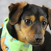 Kentucky Humane Society - A25224122 Milton1 (March 27, 2015)