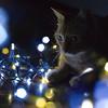 Myu and lights.