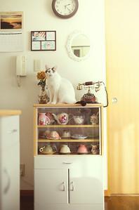 Hana on the shelf.