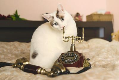Hana and retro phone.