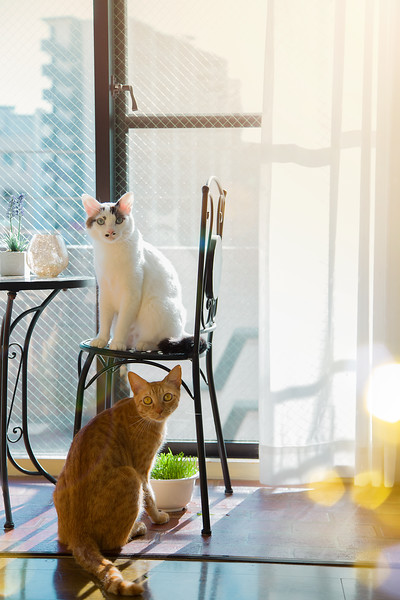 Myu and Hana by the window.