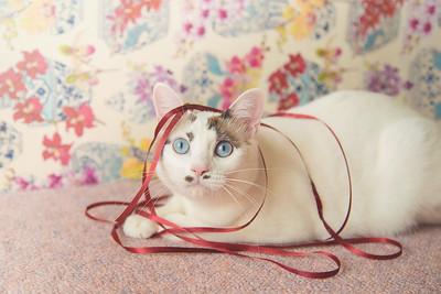 Hana and red ribbon.