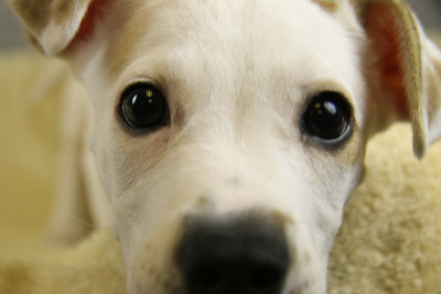 Kentucky Humane Society - A24450781 Maggie3 (Jan. 3, 2015)