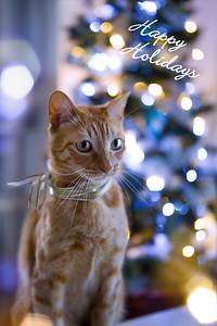 Happy Holiday.