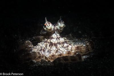 Mimick Octopus