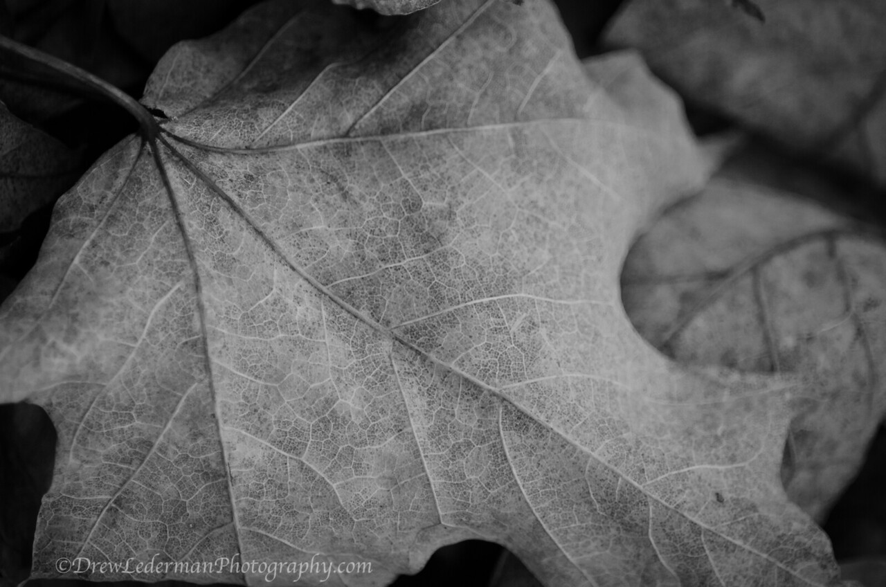 Berkshires Fall Textures 3