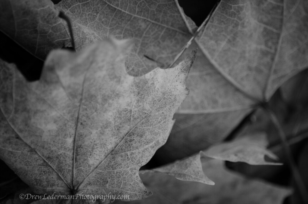 Berkshires Fall Textures 2