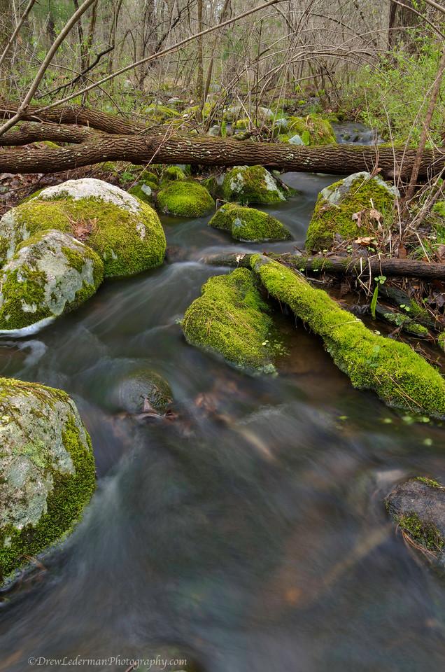 Tuckers Mossy Stream