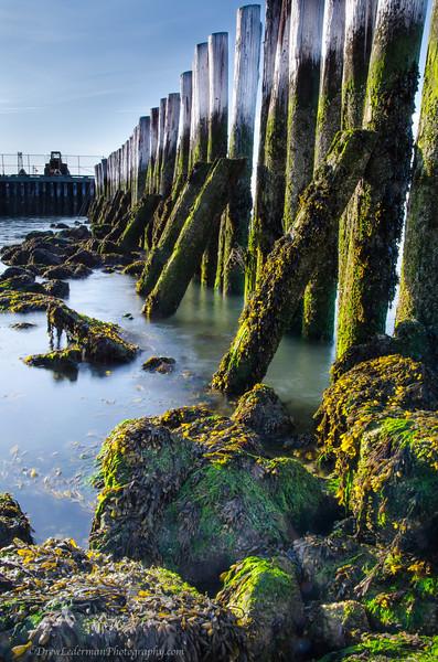 Mossy Pier<br /> Castle Island, Boston