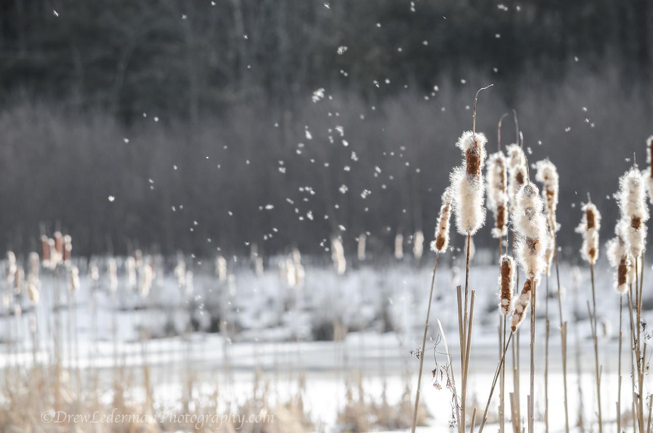 Wind Blown Seeds
