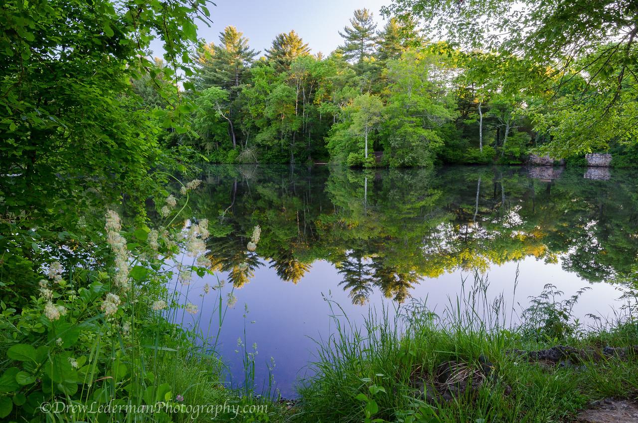 6/12/14<br /> Tuckers Preserve. Pembroke, MA