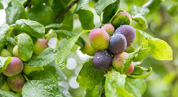 Week 29 - Fruit