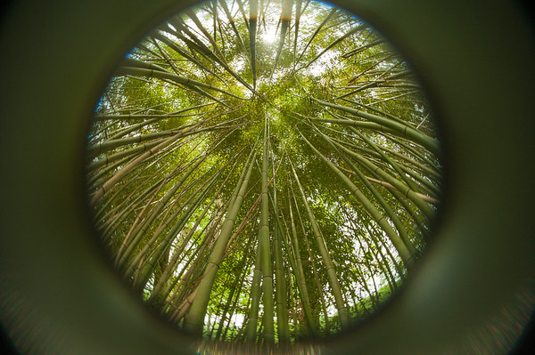 Bamboo to the Sky