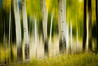 A little motion was added to the turning Aspens in New Mexico. It makes for a more This is available is several framing options along with greeting cards. Remember there is a 30-day money back guarantee.