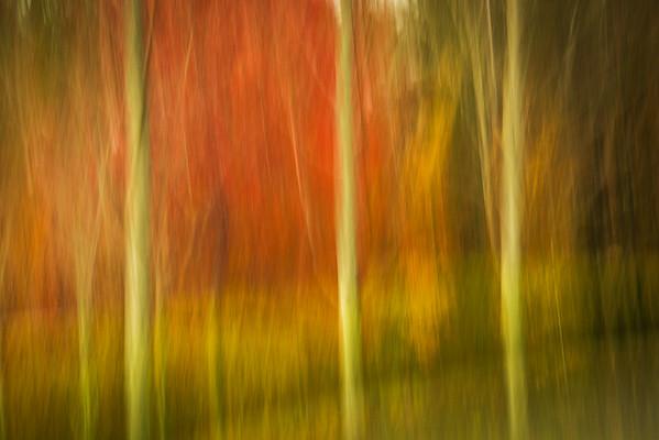 Abstract Fall 8