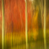 Abstract Fall 8