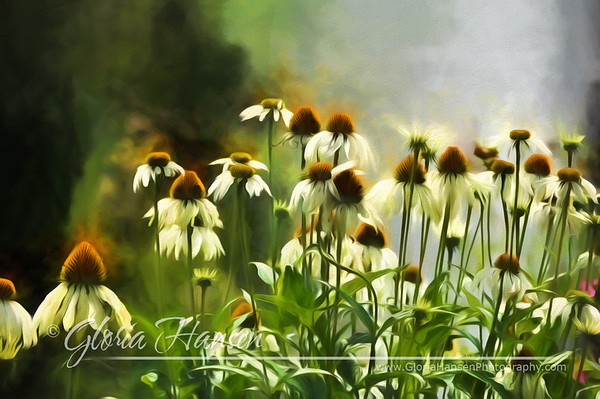 _DSC0624-fieldflowers-art-July2012