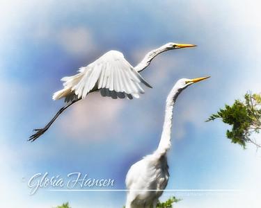 Egrets_GLO7748