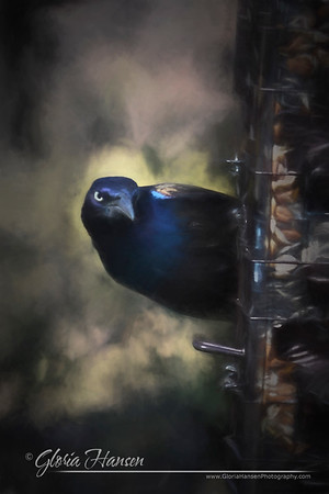 grackle_GLO1460-painting3