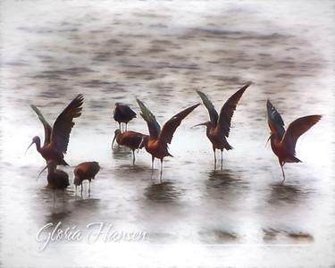 Ibis-Art_GLO7836