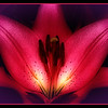 "<center><h2>""MIDNIGHT LILLY""</h2></center> <center><em>-Looks Great Enlarged-</em></center> I Shot this Lilly tonight at my best friends house, The original was a beautiful image itself but I wanted to do something a little different then the usual FLOWER Image. So off I went into CS3 to work a little of my magic. I did most of the post using Nik Color Efex 3 filters by first bringing a grad filter into play, followed by some contrast adjustments and then a Midnight filter to give it the look of being shot late at night. Then a small amount of unsharp mask & then finished with a purple colored circular frame which I blended into the corners ever so slightly to highlight just the corners and enhance the end of the pedals and then enlarged the canvas with the square frame colors. <em>*(Be sure to click on the image to enlargen it)*</em>  This is NOT a macro image but was actually shot with my Nikkor 18-200 VR lens since i didn't have my macro with me. It was shot hand held using: Nikon D300 LENS: Nikkor 18-200mm VR Shutter Speed 1/200 AP- f/20 ISO 1000 Focal Length 112mm Standing about 4' away from the bush and shot from an angle below the flower upwards.   I'm so Happy the way this turned out I think it will be going in my Portfolio, What do you think? ~Thanks for looking - Bill~ <span style=""color:yellow""><em>*If you like this image please hover over it and click ion the THUMBS UP icon so it becomes a Popular Photo on my site!</em></span>"