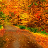 """<center><em><h2><u>""""The Road to Color""""</u></h2></em></center> 10/16/08 While Driving today I got stuck behind a SLOW POKE on the only single lane road leading out of town and was getting frustrated so I jumped off onto this small fire road and was shocked by the colors in this tunnel like ride. it was raining pretty good all day today so there was no sun and nasty puddles everywhere but I was able to snap this by opening my sun roof and sticking the D300 out on constant focus and shot it while doing about 10 mph. I was amazed by the composition I was able to get since I was in the center of the road and being above the car it gave me some extra height then the usual eye view, I think it worked out pretty well LOL.  In post I did a minor contrast adjustment and small crop off the bottom, that's it! I'm enjoying the colors here now but I see them disappearing very rapidly so I'm going to try and get some shots everyday now until their gone. It's supposed to get very cold here starting tonight in the 50's as a high during the day and low 40's to high 30's at night Brrrrrrrrrr. I got some other shots from today to process yet but I will be putting them in my Fall Colors 2008 gallery when there finished.  Hope you all enjoy your day, Bill Pador"""