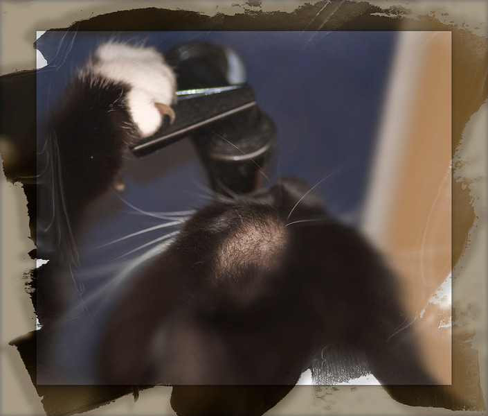 This is My cat Oreo taking a drink from the water cooler. He taught himself this move and is quite good at it. He presses the lever with just enough pressure to start the flow of water and doesn't waist a drop while getting a cold drink! PS: He's not really balding on top of his head, just the angle I shot this made his hair look thin for some reason LOL<br /> <br /> ~Bill~