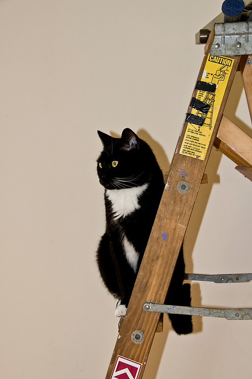 5-8-09 My little buddy OREO was helping me hang some pictures today. He climbed up the ladder to take some measurements and then got some treats LOL.