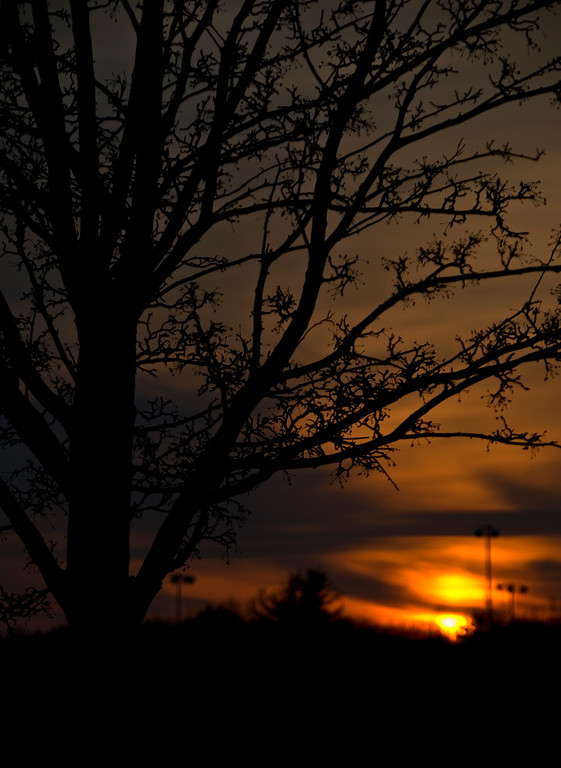 Added 3/20/09 - Sunset Silhouette