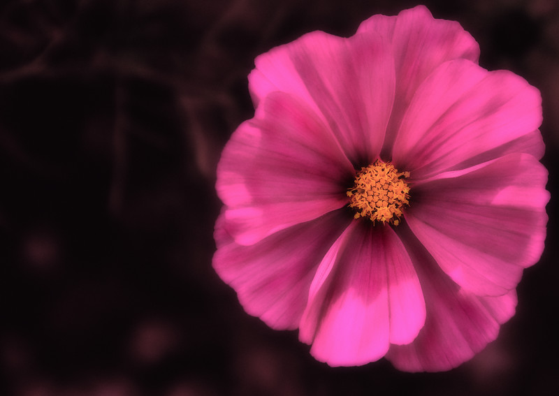 This image was post processed using my custom Soft Focus / Orton effect that I created in photoshop