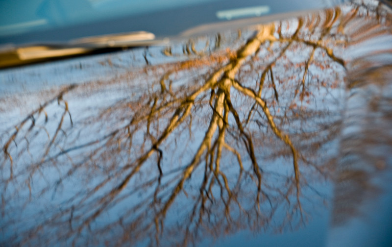 Added 3/20/09 - Tree reflection in the hood of my car