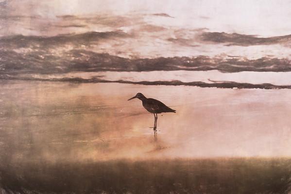 Beach bird 1