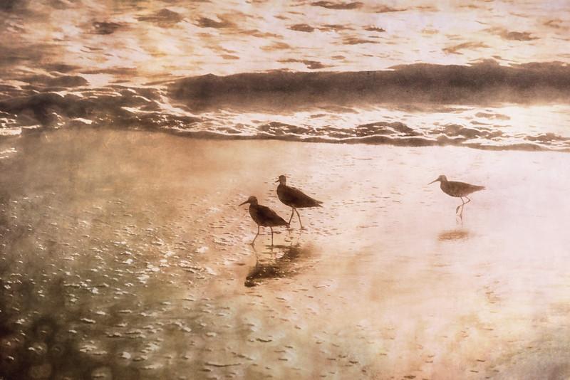 Beach bird III