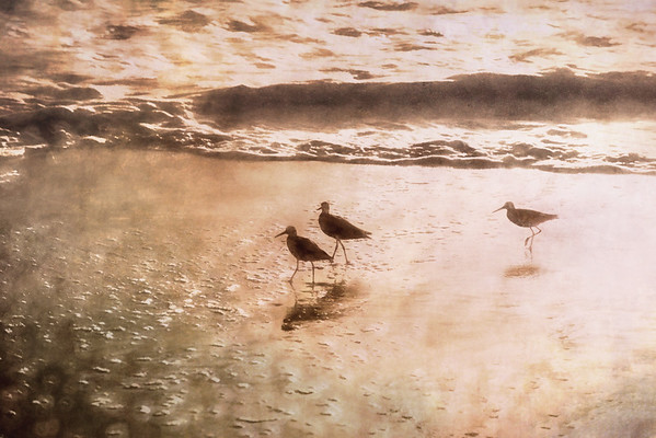 Beach bird 3