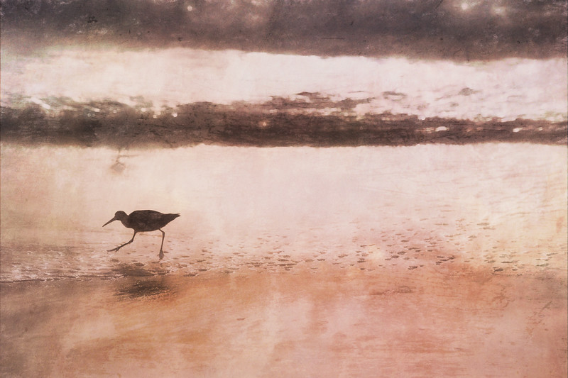 Beach bird IV