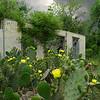 Storm Cactus