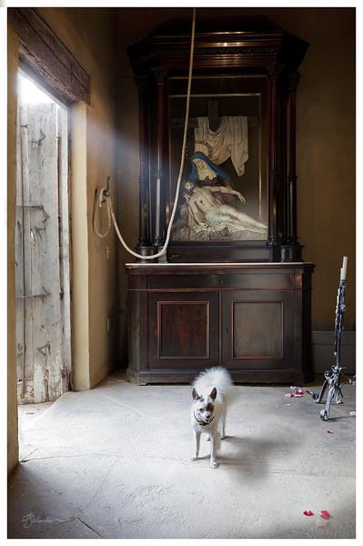 Renaissance Dog