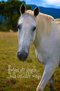 Horses are angels with invisible wings