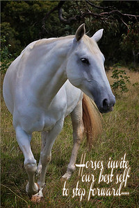 Horses invite our best self to step forward
