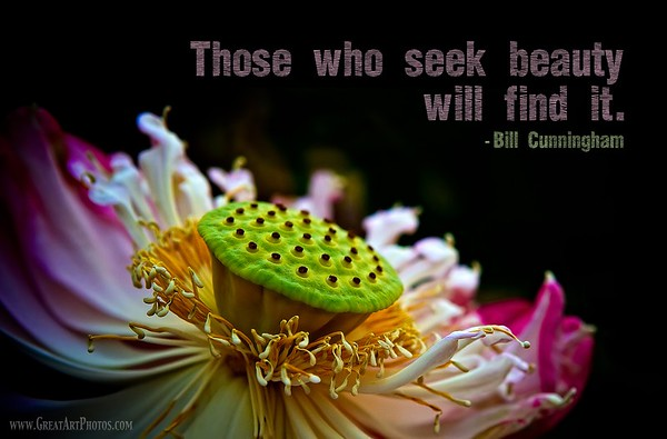 Those who seek beauty will find it