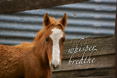 Let a horse whisper in your ear